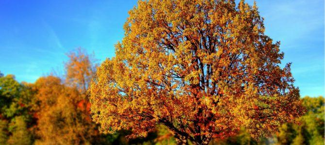 Cupones de otoño